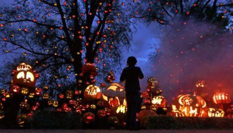 Passion for pumpkins2